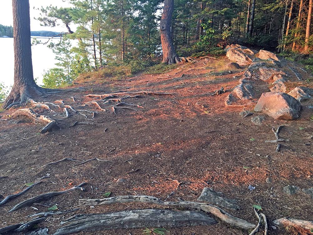 Big Trout Lake Campsite #26 larger tent spot