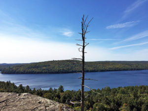 Lone tree standing tall at the Booth Rock Trail lookout point in Algonquin Park