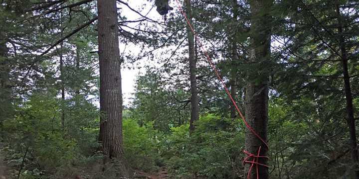How to Properly Hang Your Food in Algonquin Park