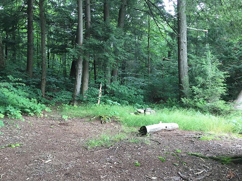 David Lake campsite #2 tent spot areas