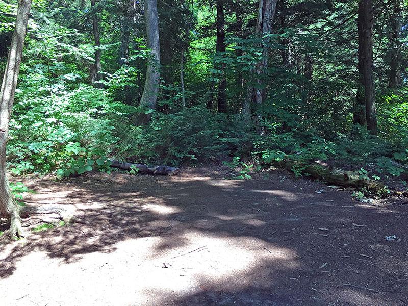 Little Trout Lake Campsite #1 flat tent spot