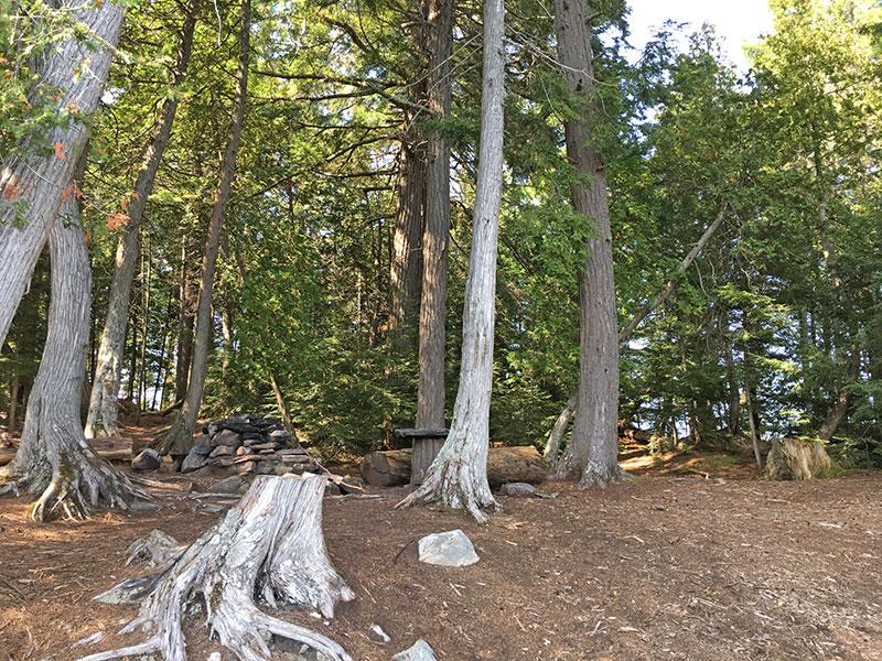 Red Pine Bay Campsite #1 interior of site