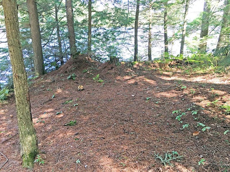 Sproule Lake Campsite #1 flat tent spot