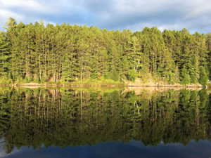 Tree shoreline reflecting on the waters of Sproule Lake in Algonquin