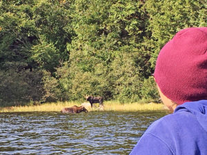 Close up of two moose on the shoreline of Pen Lake