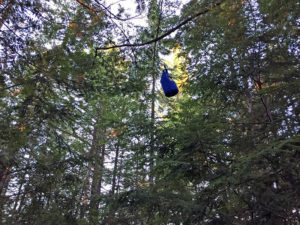 Hanging our food pack at our campsite on Lake Louisa