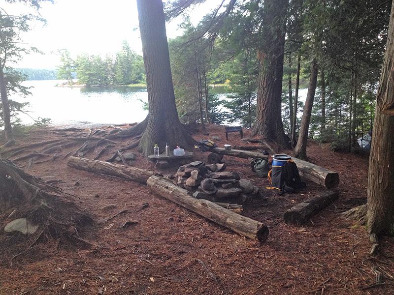 Lake Louisa Campsite #20 interior of the campsite