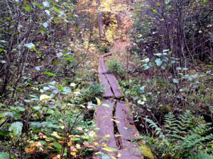 Boardwalk through a portage trail in Algonquin Park fall 2016