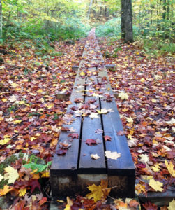Leaves covering a boardwalk in the middle of a portage trail in Algonquin