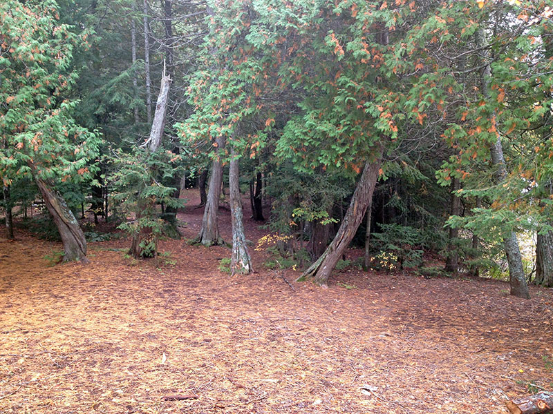 Harness Lake campsite #5 large flat ground for tents