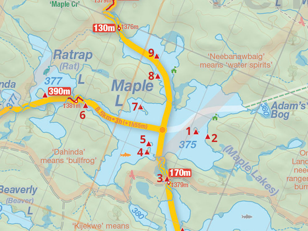 Map of Maple Lake campsites in Algonquin Park