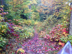 Beautiful colours in a section of a portage trail