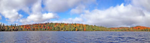 Tree shoreline with amazing fall colours on Head Lake in Algonquin Park