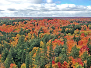 Close up of the beautiful fall colours in front of the Skymount Lookout view