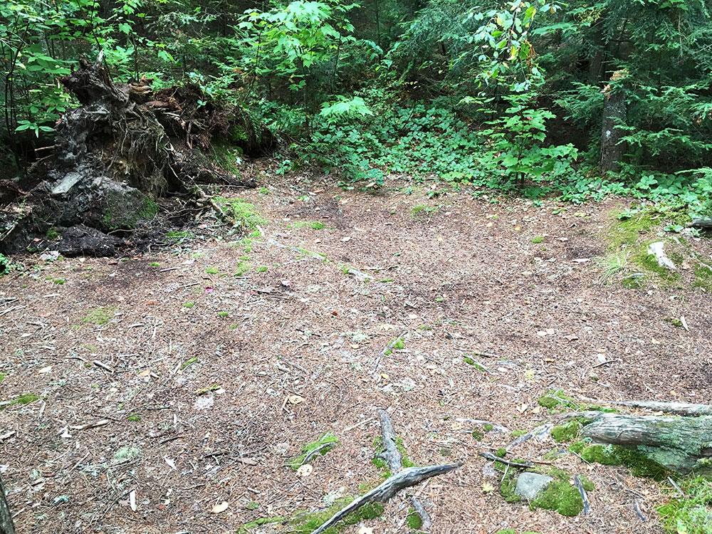 Tent spot option on Misty Lake campsite in Algonquin Park