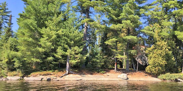 McIntosh Lake – Campsite #10