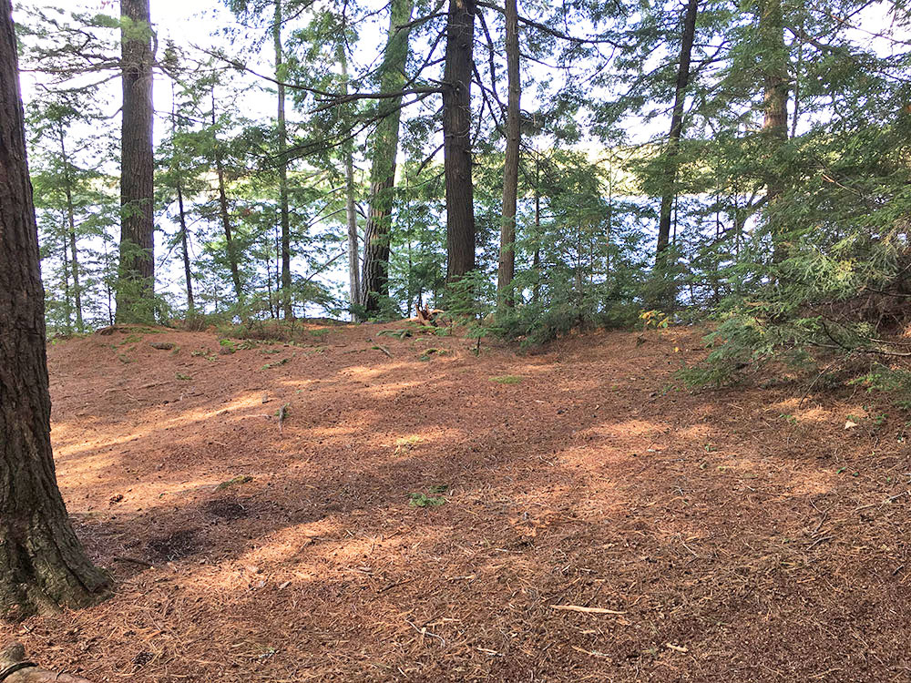 Tent spot on McIntosh Lake island campsite #7