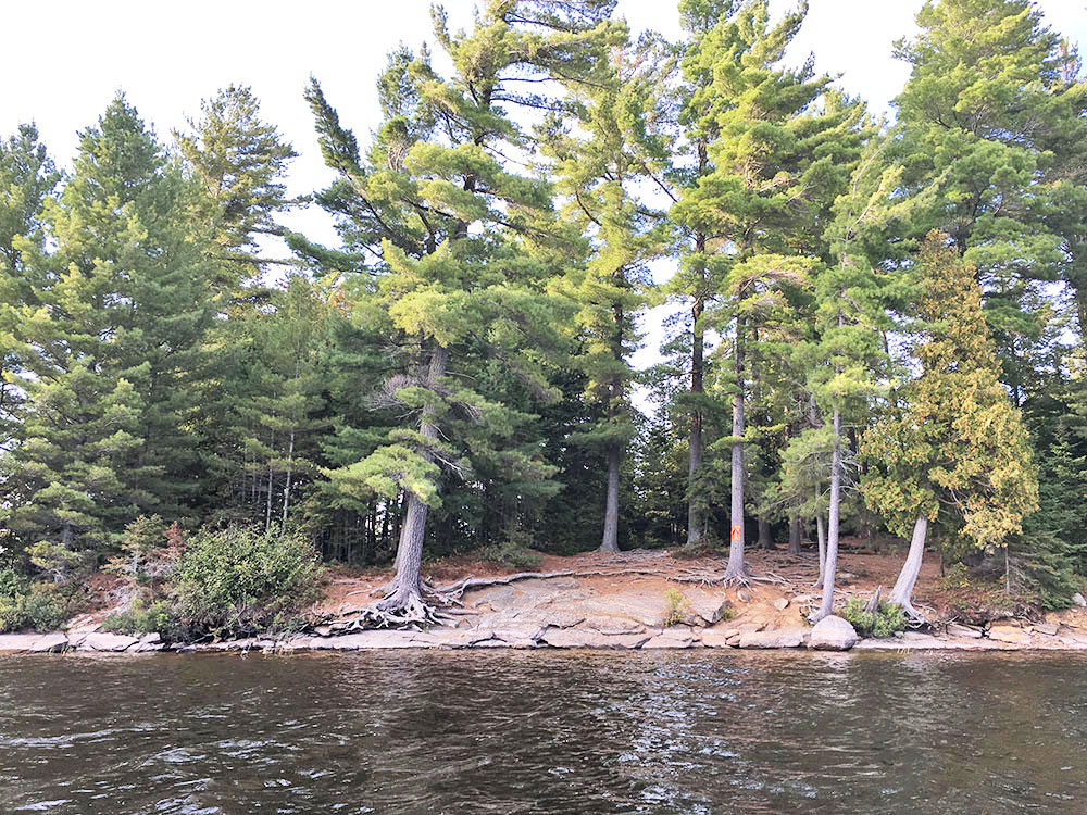 View of campsite #11 on McIntosh Lake from the water