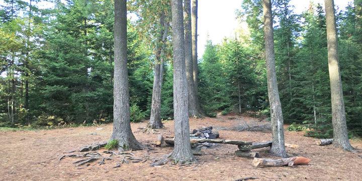 McIntosh Lake – Campsite #11