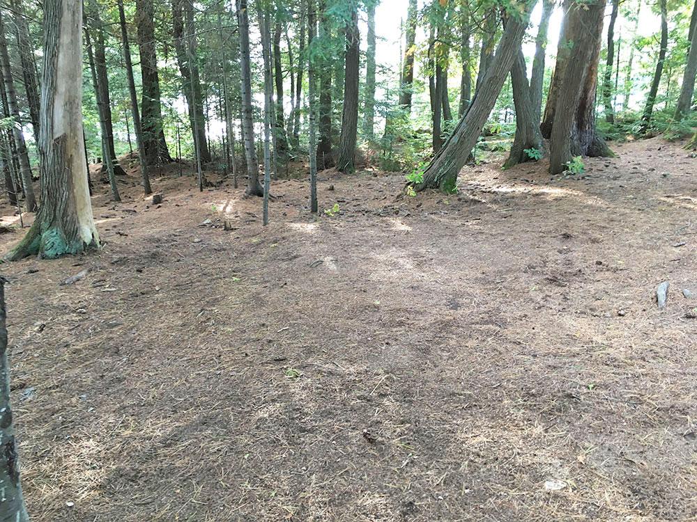 Large tent area on McIntosh Lake island campsite #11
