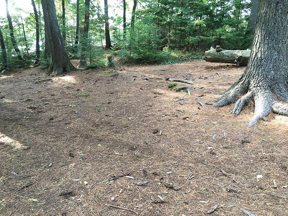 Tent spot option on McIntosh Lake island campsite