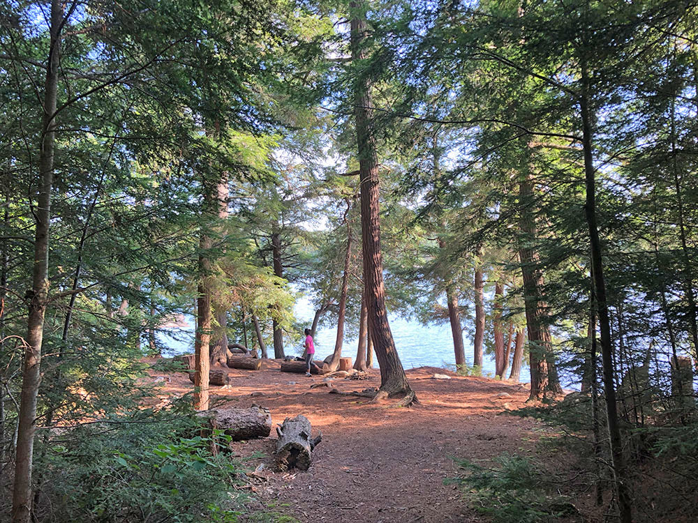 Looking into the main area of campsite #19 on Lake Louisa