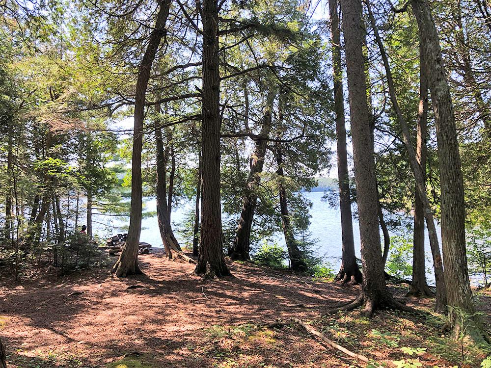 Interior of campsite #5 on Lake Louisa in Algonquin