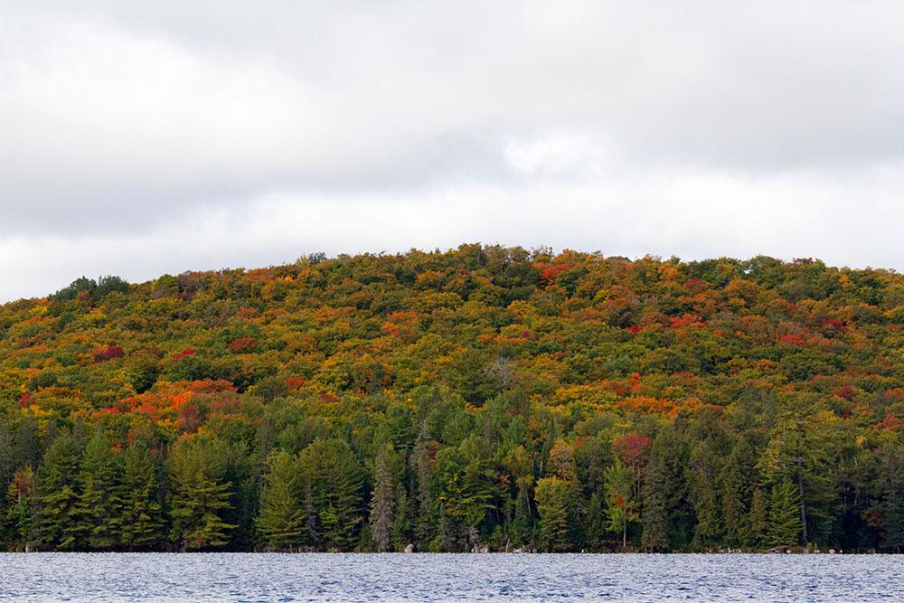 Fall colours on Burnt Island Lake on Sept 17 2020