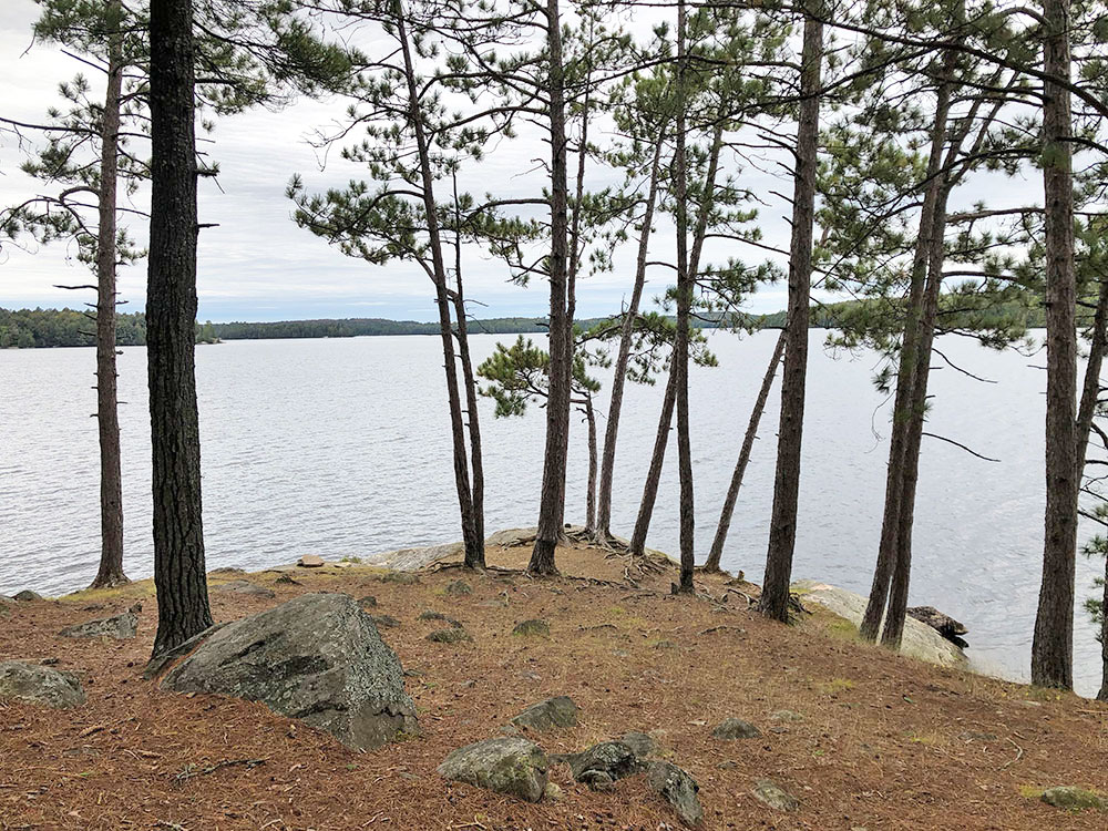 West side of island on campsite #11 on Big Trout Lake in Algonquin