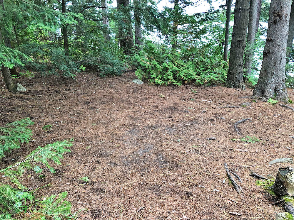 Flat ground to pitch tents on Big Trout Lake campsite #11 in Algonquin