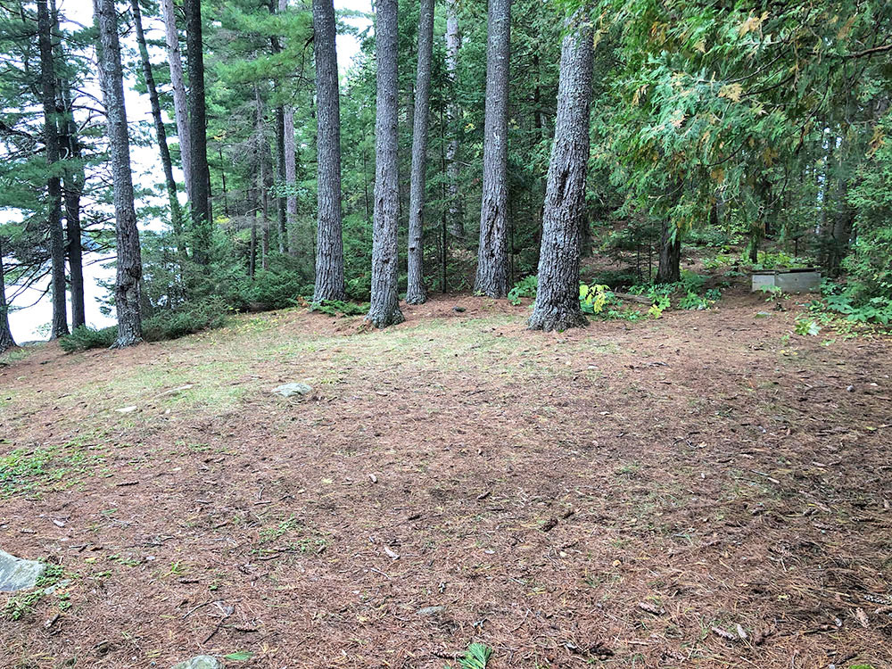 Large flat ground nearby the thunder box on Campsite #11 on Big Trout Lake in Algonquin Park