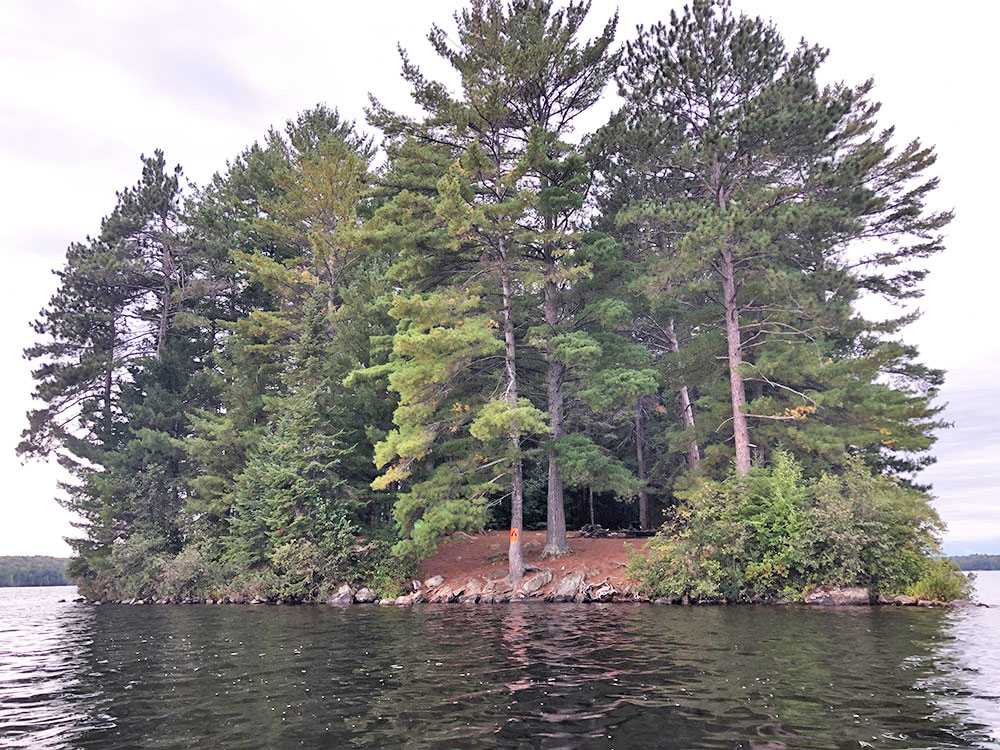 View of the small island campsite #11 on Big Trout Lake in Algonquin from the water