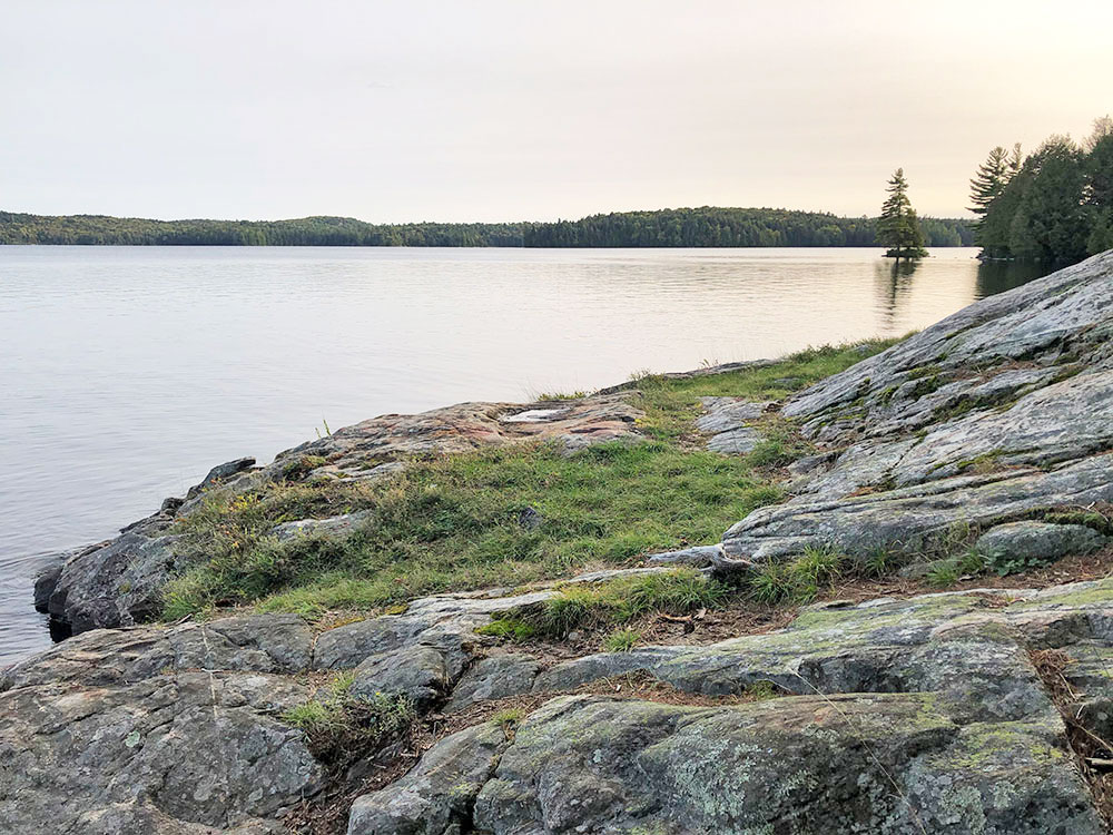 Grassy patch on large rocky shoreline at the front of campsite #13 on Big Trout Lake