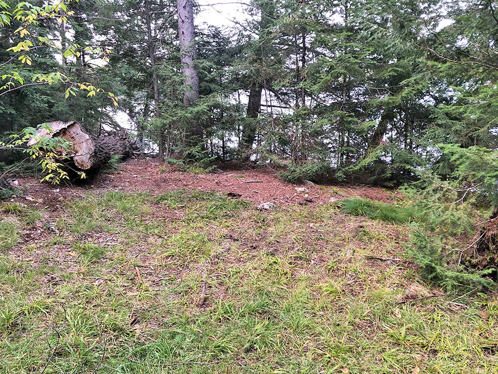 Grassy patch of flat ground to pitch a tent on Big Trout Lake campsite #14
