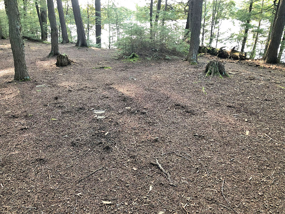 Large flat ground to pitch a tent on Campsite #15 on Big Trout Lake