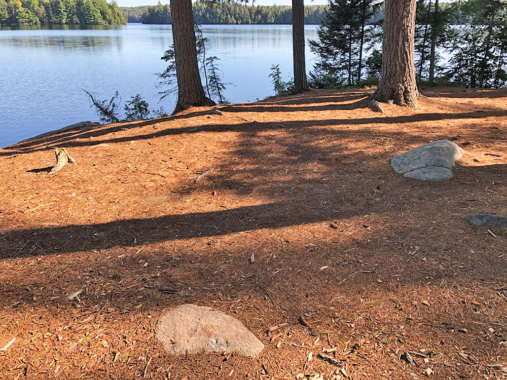 Large flat ground to pitch a tent on Big Trout Lake campsite #22 in Algonquin