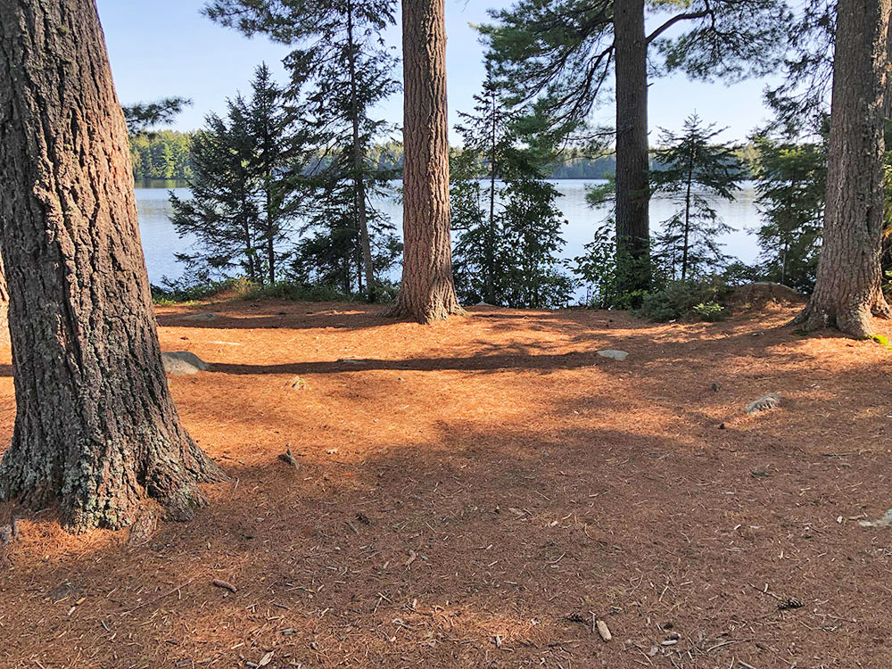 Large area that can accommodate a few tents on campsite #22 on Big Trout Lake in Algonquin