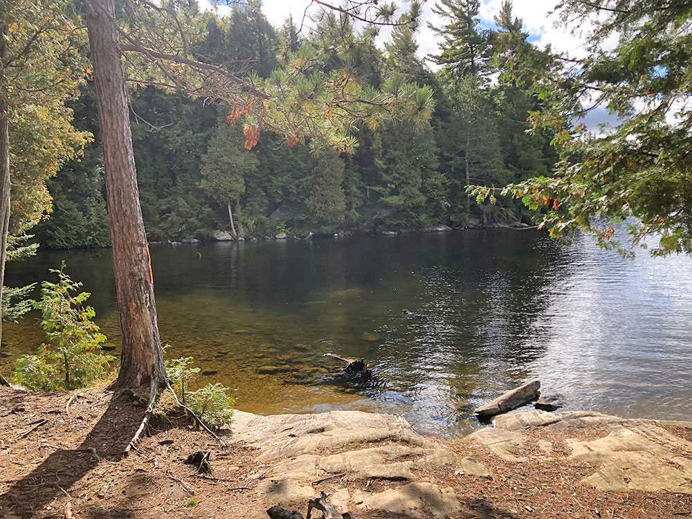 Small private bay for campsite 28 on Burnt Island Lake in Algonquin Park