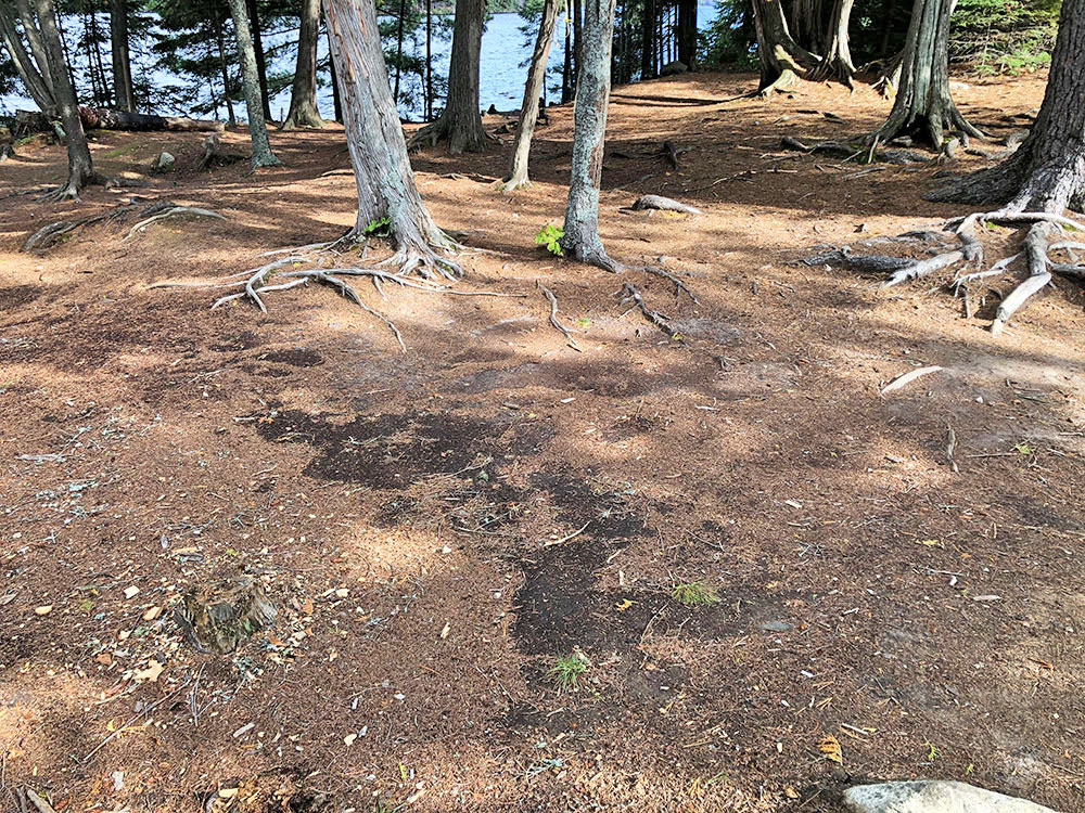 Large flat ground to pitch tents on Burnt Island Lake campsite 28