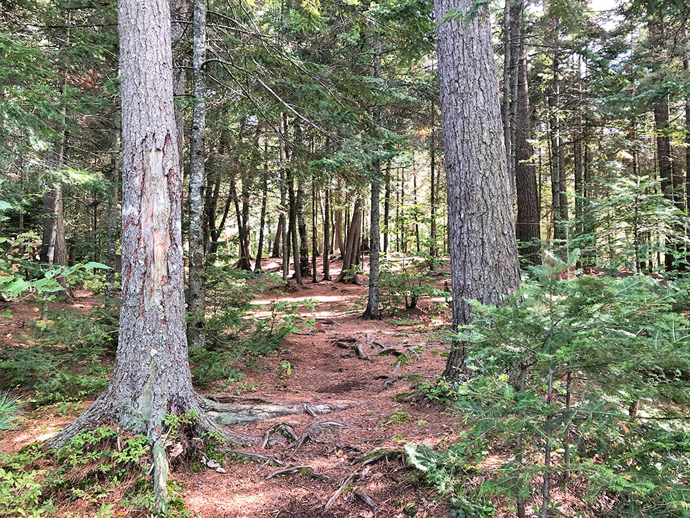 Trail between the two island campsites on the south island on Burnt Island Lake