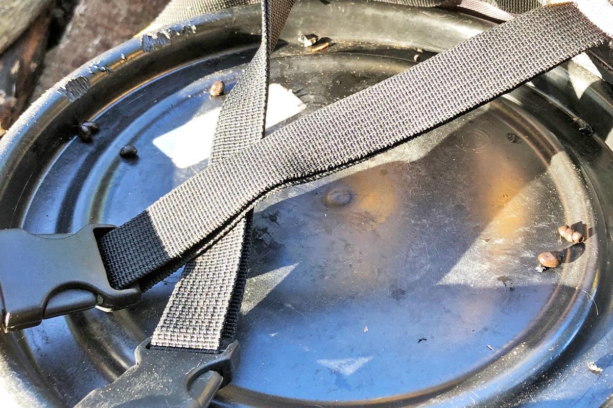 Chipmunk poop on top of blue food barrel lids