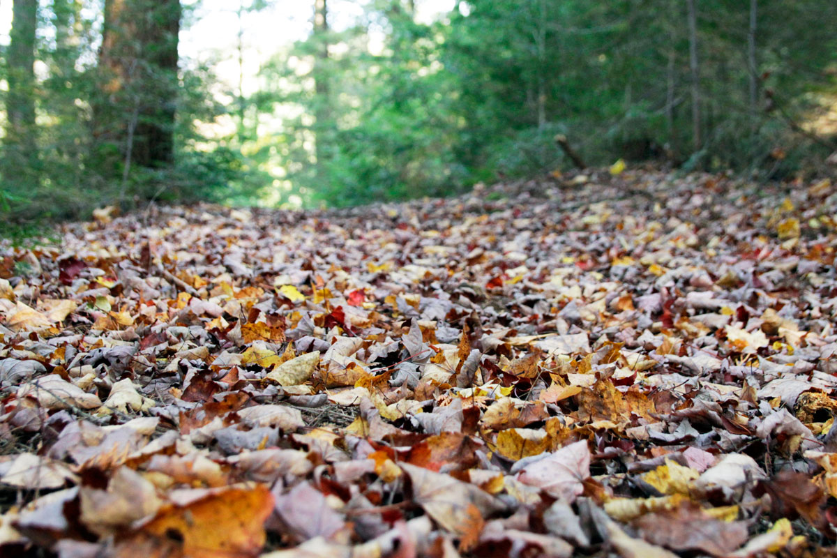 Fallen leaves behind Ragged Lake campsite during October long weekend