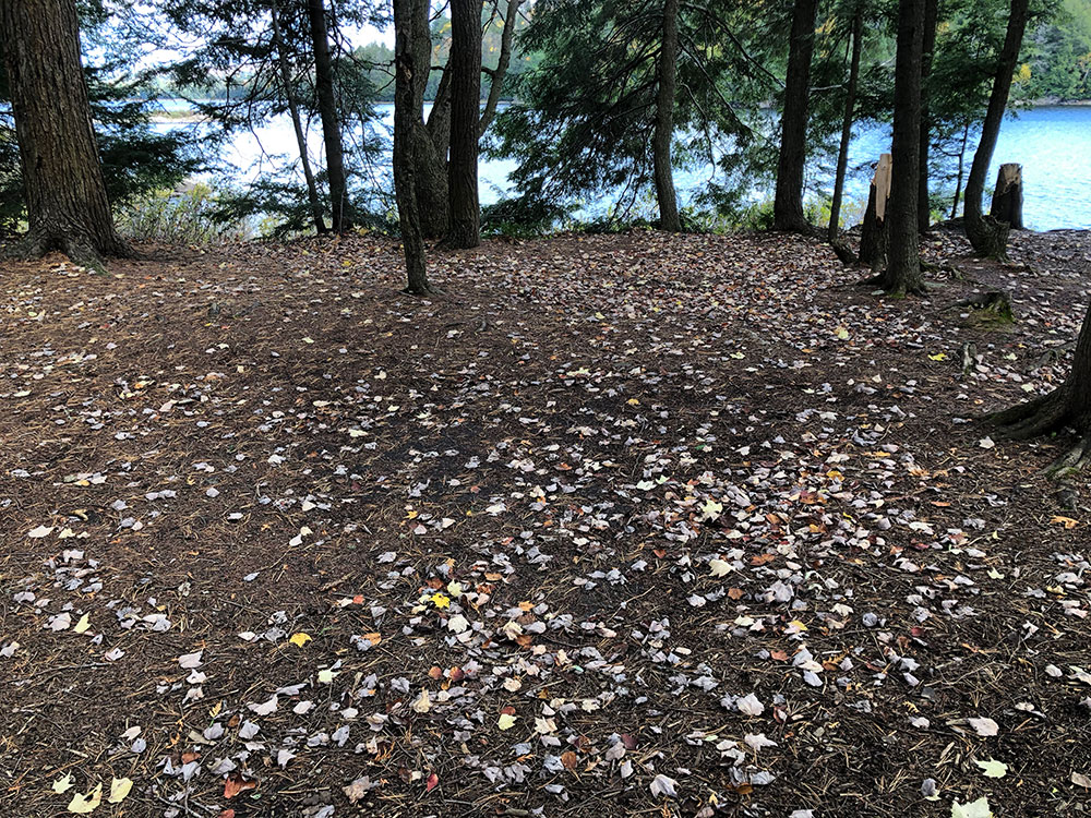 Flat tent spot with fall leaves on Ragged Lake campsite #3