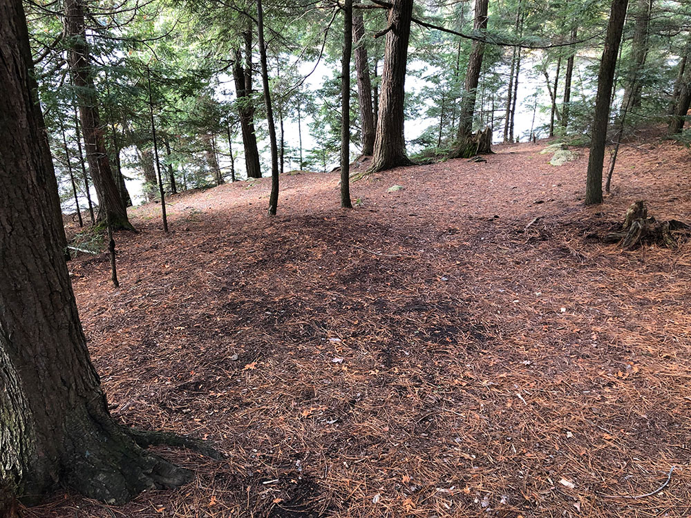 Flat ground to pitch a tent on Ragged Lake campsite #9 in Algonquin Park