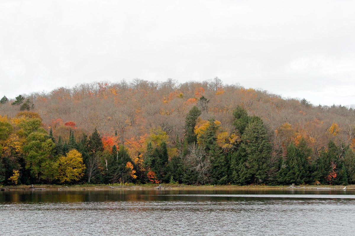 Shoreline fall colours during Thanksgiving weekend 2020 on Ragged Lake