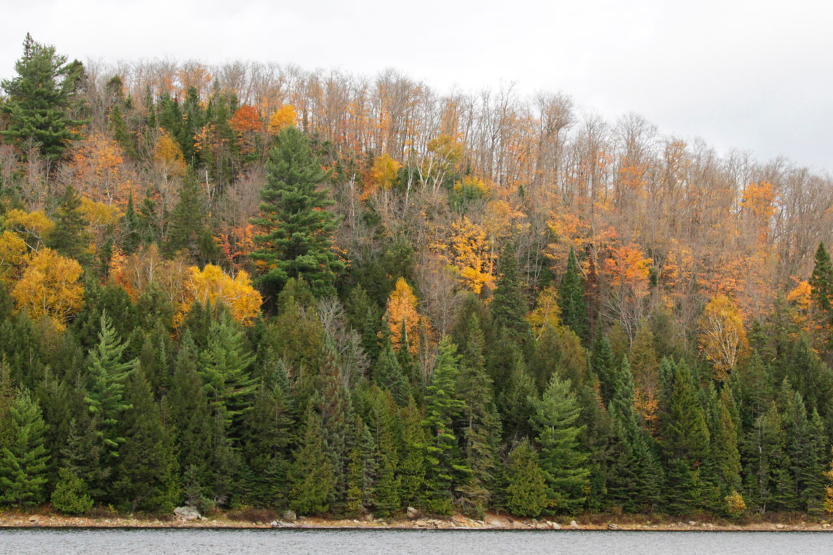 Yellow, orange and green trees fall colours Thanksgiving long weekend 2020