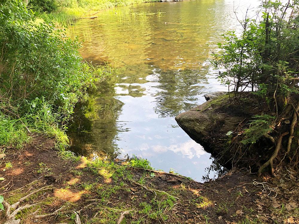 Little Trout Lake Campsite 10 Algonquin Park canoe landing option 1
