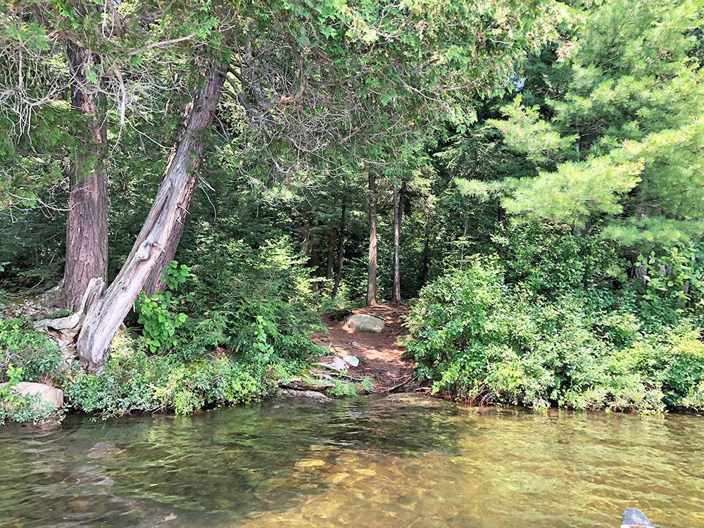 Little Trout Lake Campsite 10 Algonquin Park canoe landing third option