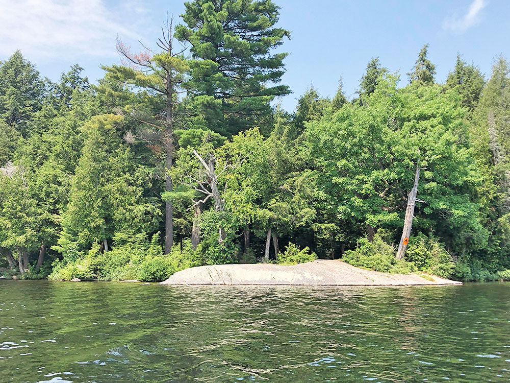 Little Trout Lake Campsite 10 Algonquin Park view of the campsite from the water