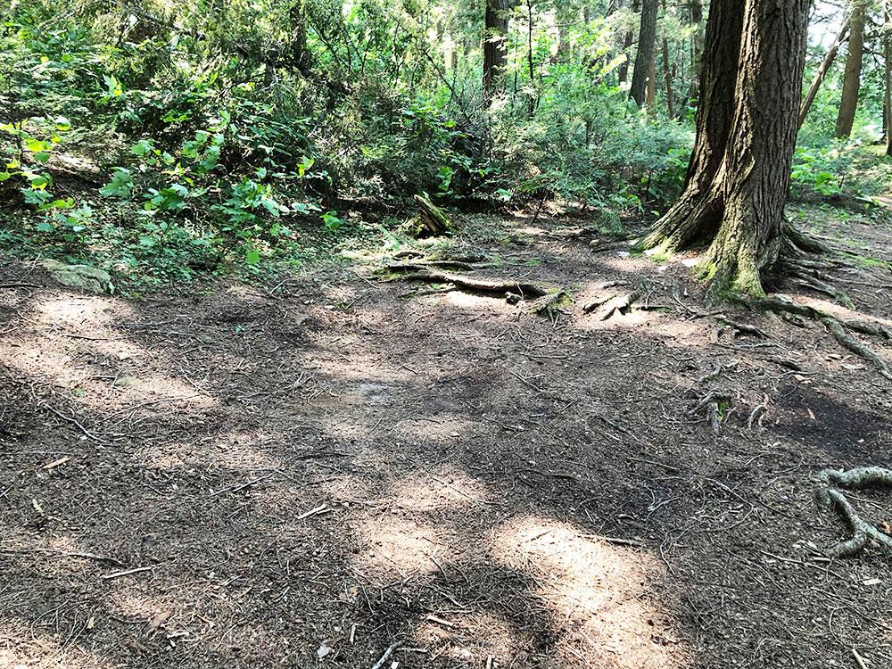Little Trout Lake Campsite 4 Algonquin Park tent spot at the campsite